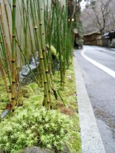 雨に濡れて、苔が生き生きとしています。