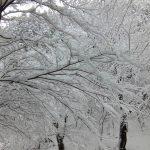 奥貴船の雪景色
